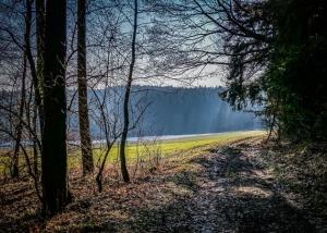 Wieder aus dem Wald hinaus