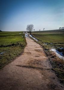 Schmaler befestigter Weg