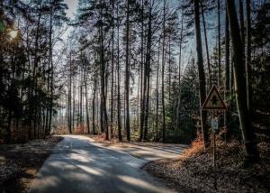 Einmündung im Wald