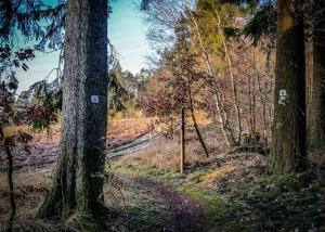 Pfad aus dem Wald hinaus