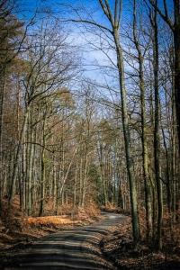 Weg im lichten Wald