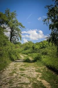 Weg bergauf in die Weinberge