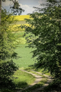 Wieder hinaus an den Waldrand
