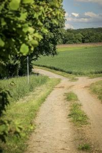 Weg zwischen Wald und Feldern
