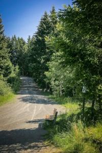 Weg hinter Schlossbergkapelle in den Wald