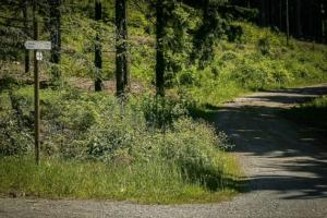 Weg wieder im Wald