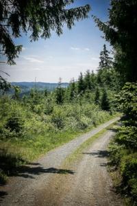 Wald und freie Flächen wechseln sich ab