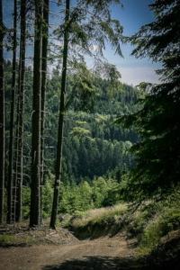 Hinunter ins Tal der Wilden Rodach