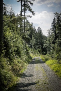 Breiter Wald-Fahrweg am Hang entlang