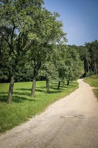 Weg bergan zum Waldrand