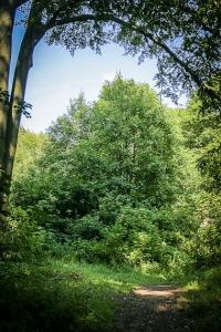 Der Wald lichtet sich