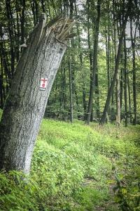 Großer Baumstumpf mit Wegweiser