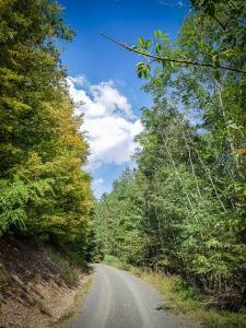 Im Wald bergan