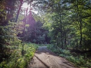 Weg im Wald sanft bergan