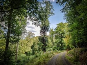 Waldweg langsam bergan
