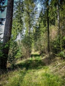 Im Wald am Hang hoch