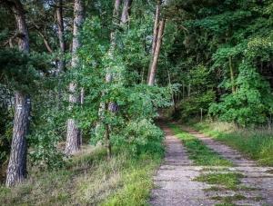 Oben im Wald geradeaus