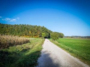 Weg hinüber zum Waldrand