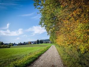 Herbstlicher Waldrand bei Stöckach