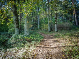 Wanderweg in den Wald