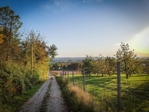 Am Zaun entlang bergab