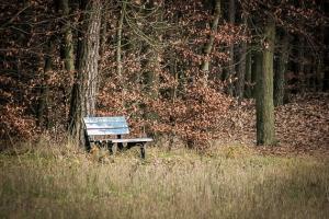 Sitzbank am Waldrand