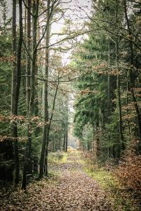 Waldweg weit geradeaus