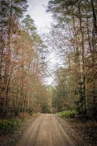 Auf noch breiterem Forstweg