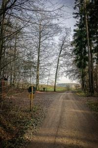 Weg hinaus aus dem Wald