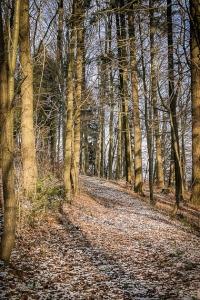 Weg im Wald am Hang entlang
