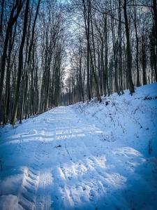 Weg im Wald bergan