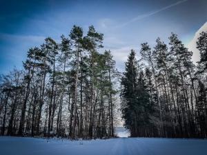 Weg durchschneidet Waldstück