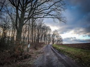 An kurzem Waldrand entlang