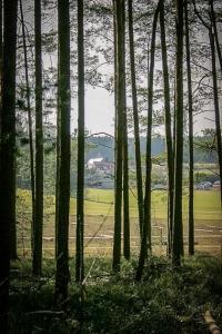 Blick aus dem Wald hinaus