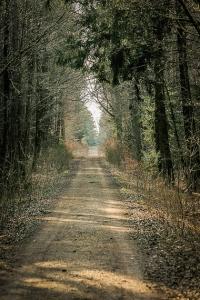 Langer schnurgerader Forstweg