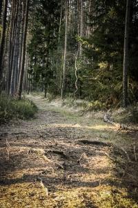 Natürlicherer Waldweg