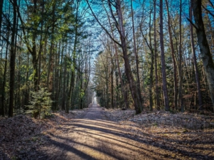 Langer schnurgerader Forstweg über Höhenrücken