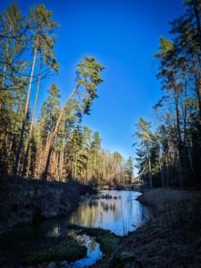 Dunkler Waldweiher