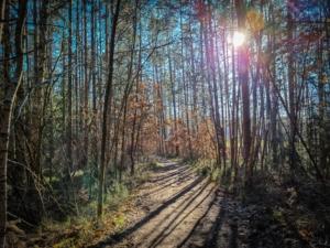 Weg durch den lichten Wald mit Blick nach Ungerthal