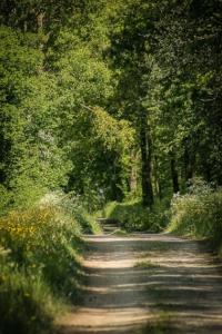 Erste Weg-Etappe im Wald