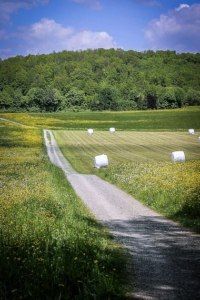 Weg zwischen Wiesen