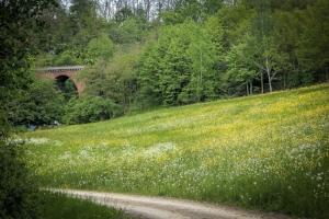 Weg durch ein ruhiges Seitental