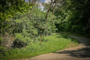 Wieder Weg im Wald