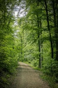 Weg im Wald Richtung Turm