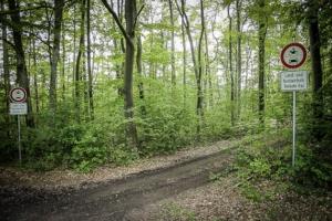 Auf den breiten Forstweg nach rechts abbiegen