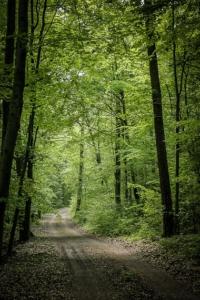 Gerader Weg durch den Wald