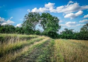 Weg zwischen Wiesen und Feldern
