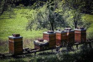 Bienenstöcke am Petersberg