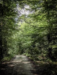 Auf breiten Forstweg