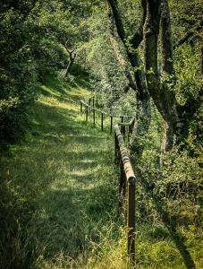 Am Holzgeländer bergab